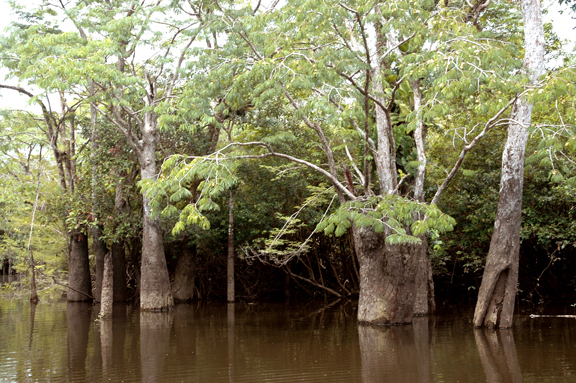 High water trees
