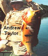 Peacock Bass - Andrew Taylor